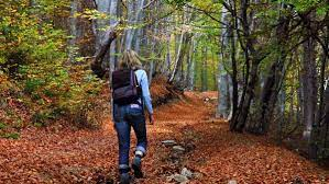 Woods walking is a great way to practice muscular meditation.